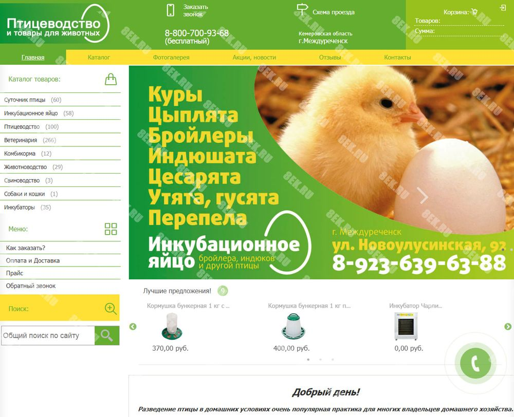 заказ сайта в Светогорске